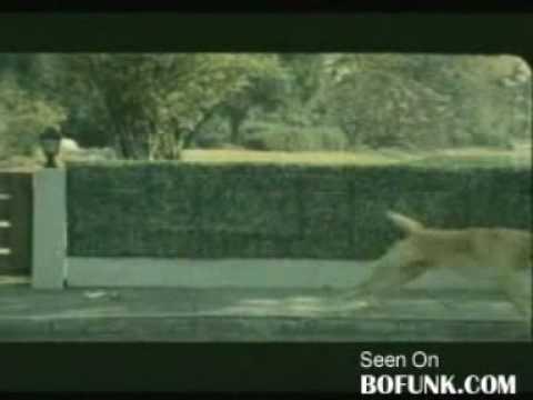 犬が自殺を図ろうとするCM動画。一体何のCMだか分かる?
