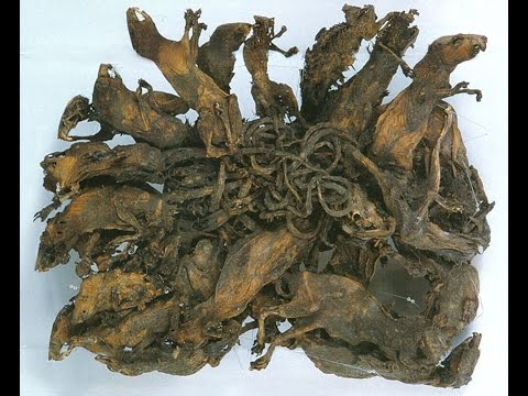 Rat kings   Historical Artifacts   unexplained Mysteries   Germany