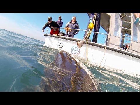 Witte haai met GoPro