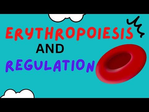 How are Red Blood Cells made? Erythropoiesis - Erythropoietin - Regulation - Hematopoiesis
