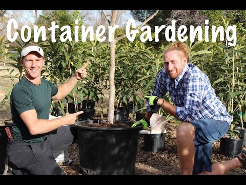 Container Growing a Fruit Tree in Your Garden