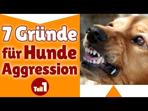 Aggressive Hunde ✔ Stephanie nennt 7 Gründe fü ...