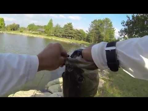 5 lb Pond Bass from Dublin, OH 8/27/14