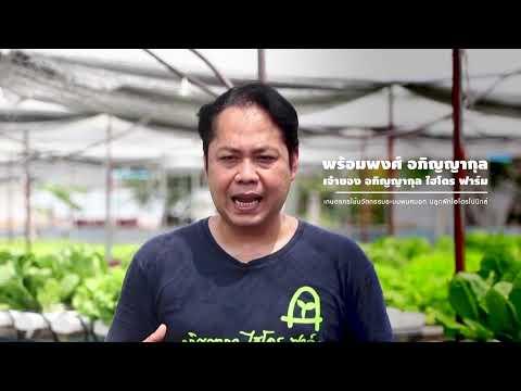 เกษตรพันธุ์ดี ตอน 3 : ปลูกผักไฮโดรโปนิกส์