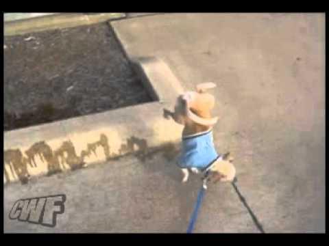 這隻狗到底忍了幾年的尿,尿這麼多!!!
