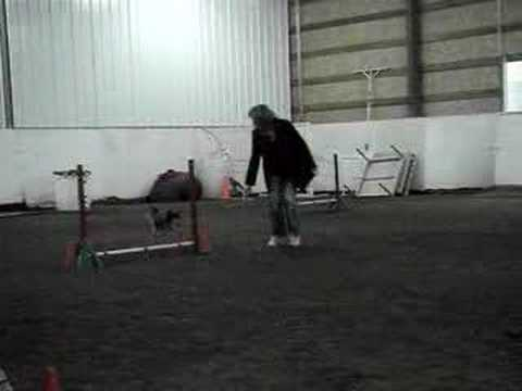 Logan: Agility Training with Three Jumps