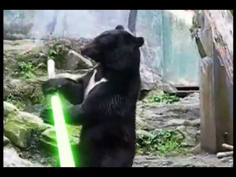 Kung Fu Bear Shows Off His Light Saber Skills