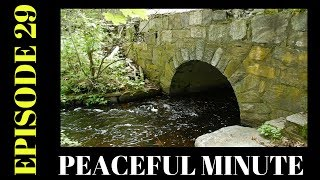 Peaceful Minute ~ Episode 29 ~ Broadmoor Spring TimeWelcome to my Peaceful Minutes Series.I will be posting 1 minute videos of peaceful moments that I see in Nature.We all can use 1 minute of peace in our busy lives.I'm planning on posting a new videos to this series every Friday for a year. (Started December 2, 2016)  That's my goal.ENJOY!!********************************************************************Please Subscribe, Like, Comment and Share:You Tube:http://www.youtube.com/user/NaturesFairyMy second Channel: BikingAway:https://www.youtube.com/channel/UCfgDmWTZuHBlJxcyai0HBWQYou can find me on:Facebook Gluten Free Page:https://www.facebook.com/SharingGlutenFreeRecipesMy Blog for all my Gluten Free and some Low Carb Recipes:http://sharingglutenfreerecipes.blogspot.com/Instagram:http://instagram.com/sharingglutenfreerecipes/Pinterest:http://www.pinterest.com/naturesfairy/Twitter:https://twitter.com/NaturesFairyGoggle+:https://plus.google.com/u/0/104572512004936962263Tumblr:http://sharingglutenfreerecipes.tumblr.com/Thanks for watching,Peace ~ Love and JoyAlways be humble ~ Always be kindBrenda ~ NaturesFairy********************************************************************Recorded: May 28, 2017Broadmoor Wildlife Sanctuary280 Eliot StreetNatick, MA 01760http://www.massaudubon.org/Nature_Connection/Sanctuaries/Broadmoor/index.php********************************************************************Peaceful MinutePeaceful Minute Episode 29Peaceful Minute SeriesPeaceful Minute in NaturePeaceful Relaxing MinuteChill out in NatureTimeout in NatureNature MeditationAway from the Hustle and BustleMoments of PeacePeaceful MomentsPeaceful Moments in NatureOne Minute in NatureOne Minute of PeaceOne Minute RelaxationSpend time in NaturePeaceWeekly SeriesSpend time outdoorsSpend time outside60 SecondsTake one minuteJune 16, 2017Relax for a minuteFriday MomentsPeaceful FridayMoments of ZenNature MomentsZen Moments in NatureMass Audubon BroadmoorBroadmoor Wildlife SanctuaryNati