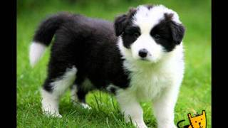 Top 10 Cutest Puppy Breeds