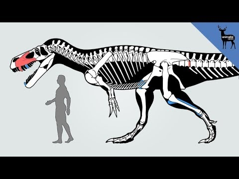 dinosaur - A news species of predatory dinosaur has been discovered in Portugal, and it may be the largest to have lived in Europe! Torvosaurus gurneyi, which could rea...