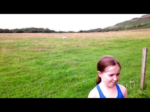 Interrupting Sheep