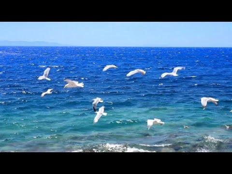Musique Relaxante - Vidéo HD - Paysages, Nature... Relaxation видео