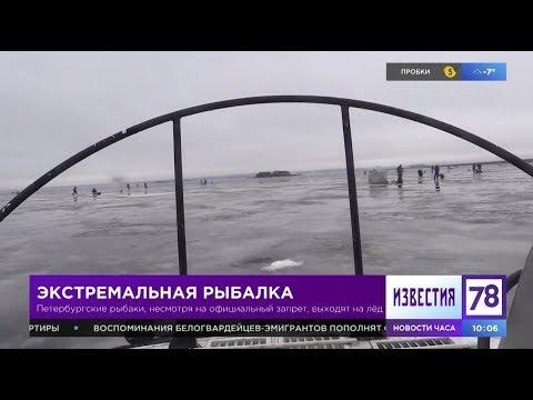 Петербургские рыбаки выходят на лед, несмотря на официальный запрет