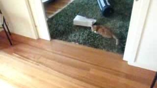 Ето как да играш на боулинг с котката