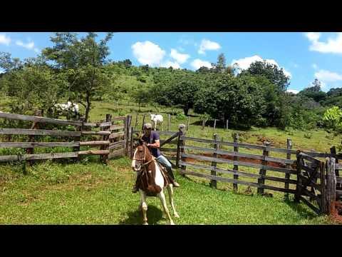 Domador de cavalos são Jerônimo da serra