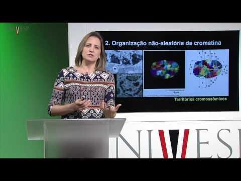 Células e Tecidos - aula 8 - Núcleo - alguns aspectos funcionais