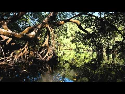 Video Alwoods - Natural Calling (HD) download in MP3, 3GP, MP4, WEBM, AVI, FLV January 2017
