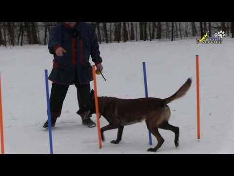 Аджилити, дрессировка воспитание собак