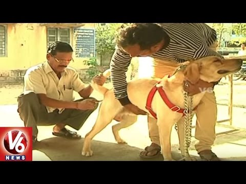 People-Face-Panic-Situations-After-Continuous-Stray-Dog-Attacks-Adilabad-V6-News