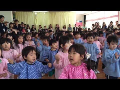 保育参観日 ピノキオ苫小牧幼稚園 2017 05 25