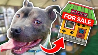 Buying a Homeless Dog an ENTIRE Pet Store! - Challenge