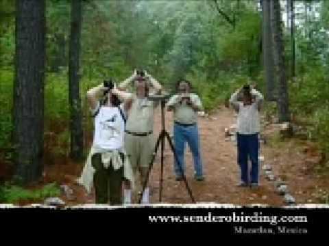 Tufted Jay Preserve Birding Tour