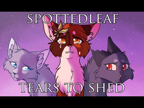 SPOTTEDLEAF MAP - Tears to Shed (видео)