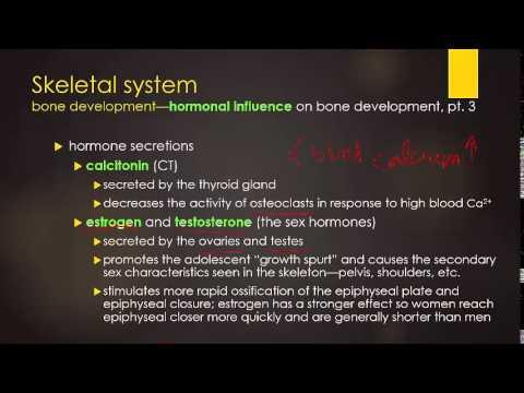 skeletal renewal -