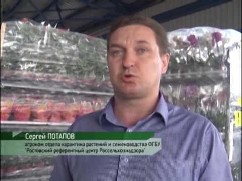 Специалисты Россельхознадзора в Ростовской области выявили зараженную партию импортных цветов