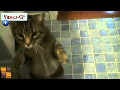 bob, il gatto più addestrato al mondo!