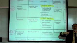 PARATHYROID HORMONE&CALCITONIN  By Professor Fink.wmv