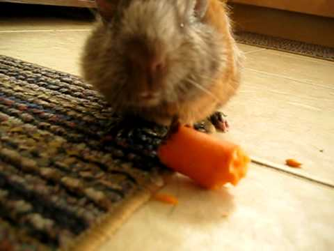Chuckie chokes on a carrot