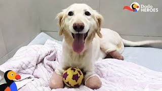 Incredible Dog Just Wants To Run — No Matter What | Dodo Heroe by The Dodo