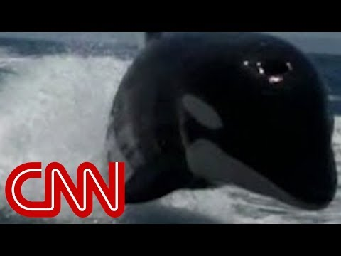 Boat - A couple vacationing in Mexico encountered a number of killer whales swimming alongside their boat during a trip.