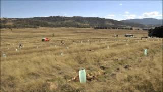 Scottsdale Australia  city images : Greening Australia Planting at Scottsdale