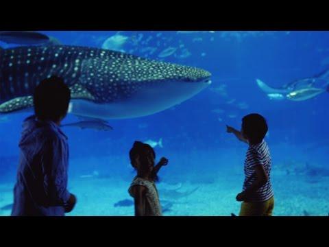 Family Trip to Beautiful Okinawa