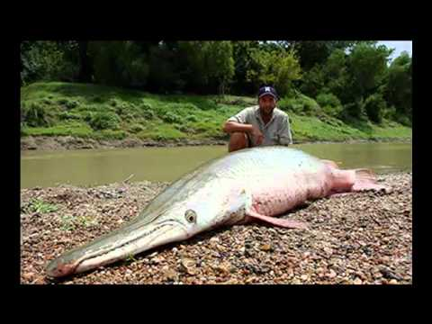фирма крокодил рыбалка