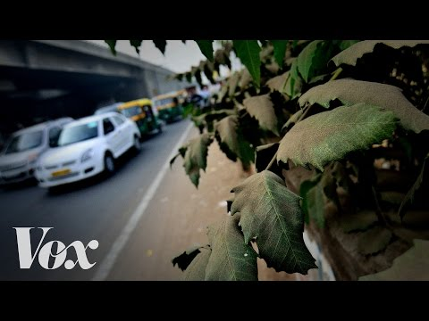 Can Planting Trees in Cities Help Fight Air Pollution?