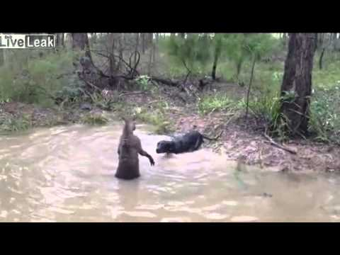 VIDEO NGERI, Kisah Persahabatan Manusia dan Harimau ( SUBAHANAALLAH )