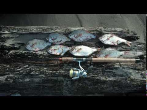 Surf Perch from the Oregon Shores – Jan 2014