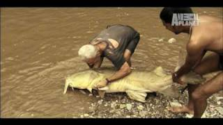River Monsters: Man-sized Fish