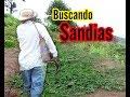 Buscando Sandias  El Salvador En El Campo