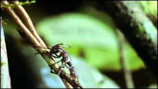 Proyecto HormigAnt – Recursos