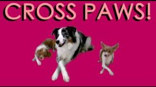 Cross your paws (Use after teaching dog to paw target)