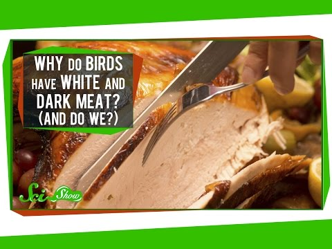 white - Why do chickens and turkeys have white meat and dark meat? And, like, gross, but .. do humans have the same thing? It's all about our muscles: what they're made of, and what they're made for....