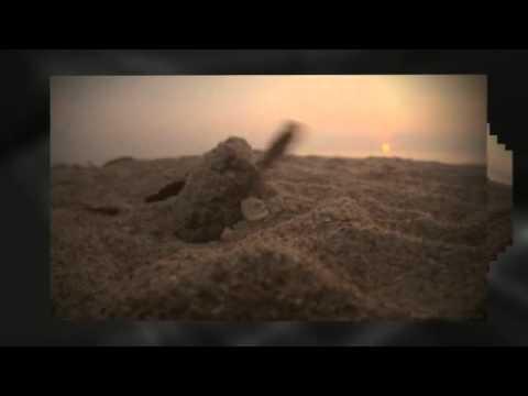 video:Denver Chiropractor | Pain Relief | Dr. John Brockway, DC | Glendale Chiropractic