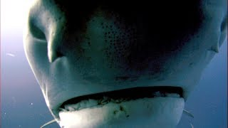 SharkWeek  Starts Sun Jul 23 Proof that even sharks have a bad day. Stream Full Episodes Now on DiscoveryGO: https://www.discoverygo.com/ See the full ...