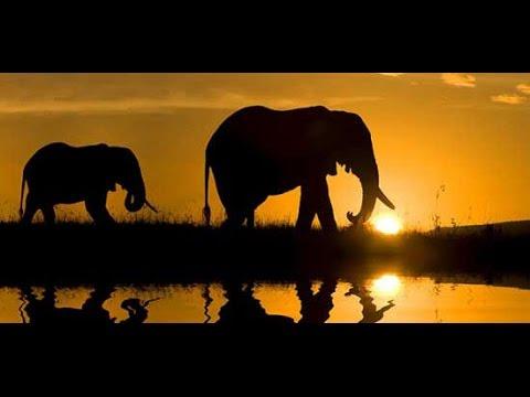 Safari Diamante, Africa do Sul