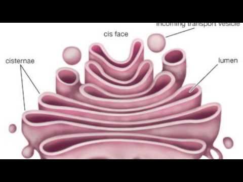 BIO ENDOPLASMIC RETICULUM JAIMEE MICHELE AND MONICA