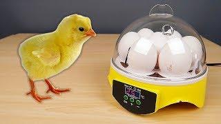 Инкубатор из Китая! Часть 1. Распаковка. Цыплята из магазинных яиц. Новый эксперимент! alex boyko